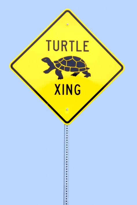 http://www.publicdomainpictures.net/view-image.php?image=89852&picture=turtle-crossing-sign